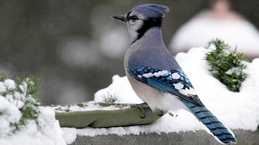 What Is the Body Temperature of a Bird?