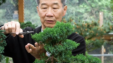 Why Is the Bonsai Tree Passed Down Within the Family?