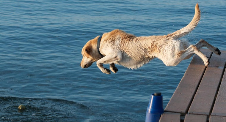 What Breeds of Dogs Have Webbed Feet?