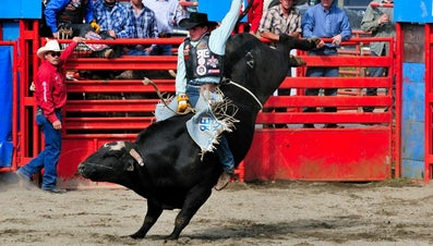 What Is Bull Riding Gear?