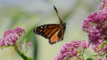 How Do Butterflies Move?
