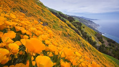 Why Is California Called the Golden State?