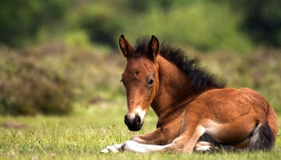 What Do You Call a Baby Horse?