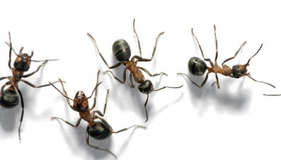What Do You Call a Group of Ants?