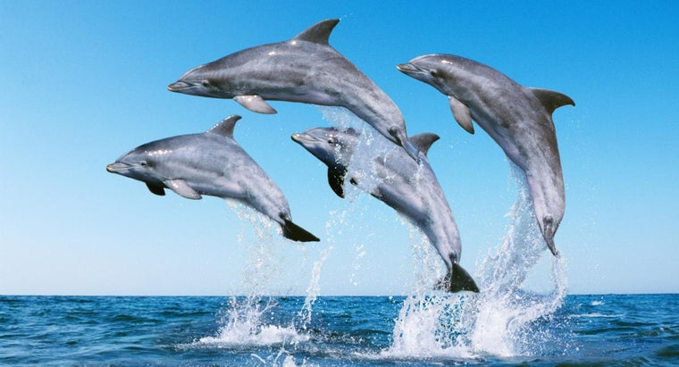 What Do You Call a Group of Dolphins?