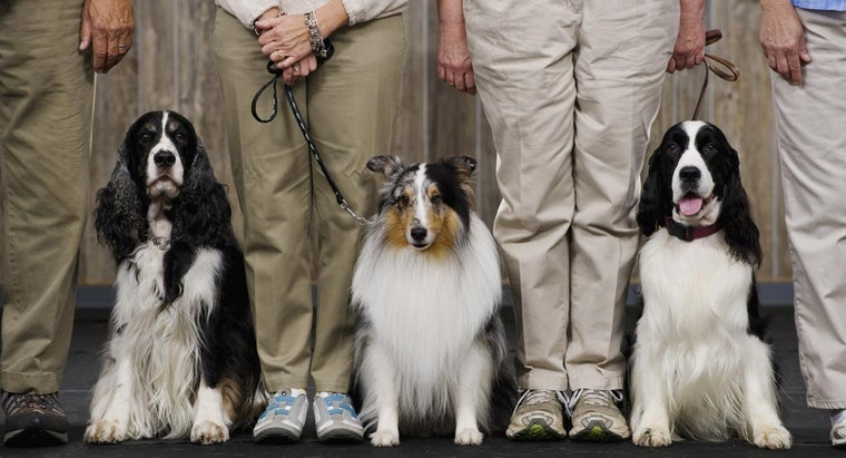 Where Can I Find the AKC Dog Show Schedule?