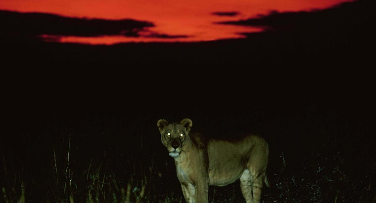 Can Animals See in the Dark Better Than Humans?