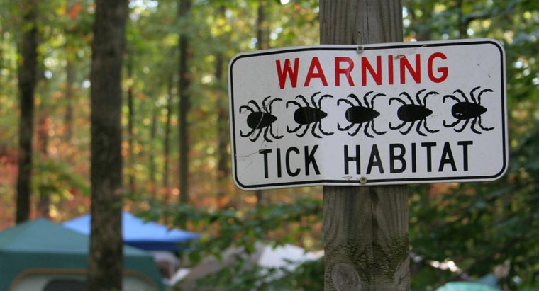 Can Chronic Lyme Disease Be Cured?