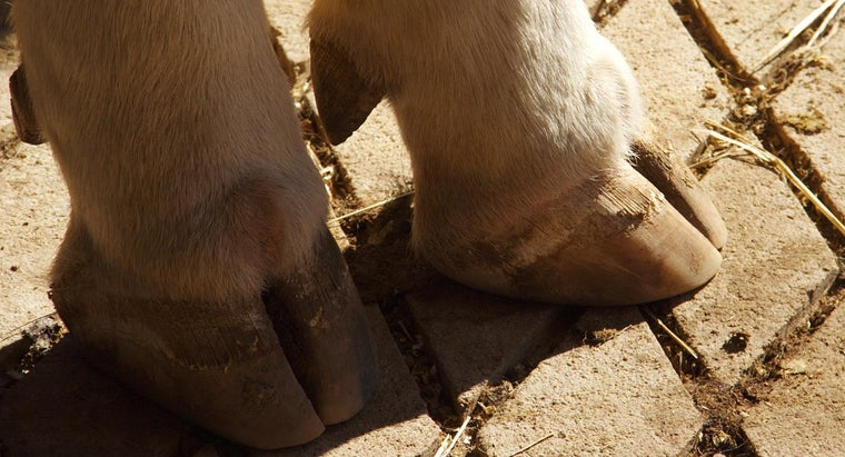 How Can I Create an Art Project With a Cow Hooves Theme?