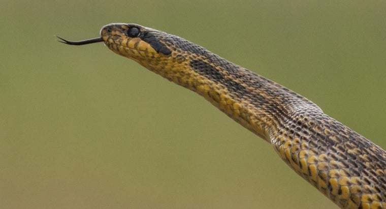 Can Dangerous or Poisonous Animals Be Controlled by Understanding Their Breeding Habits?