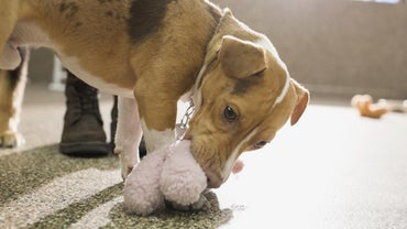 Can Diarrhea in Dogs Be Treated With a Home Remedy?