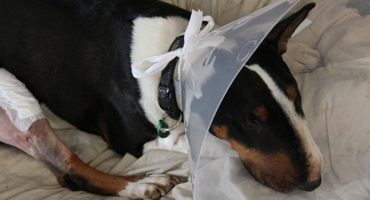 How Can I Help My Dog Recuperate After Luxating Patella Surgery?