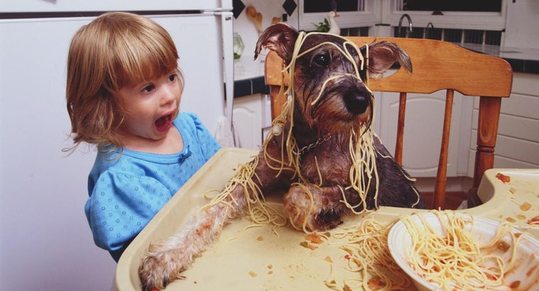 Can Dogs Eat Pasta?