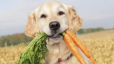 Can Dogs Eat Raw Carrots?