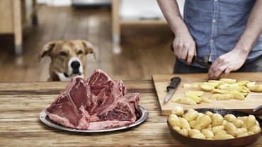Can Dogs Eat Steak Bones?