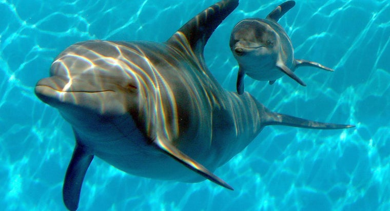 Where Can You Find a Dolphin Cam of Winter?
