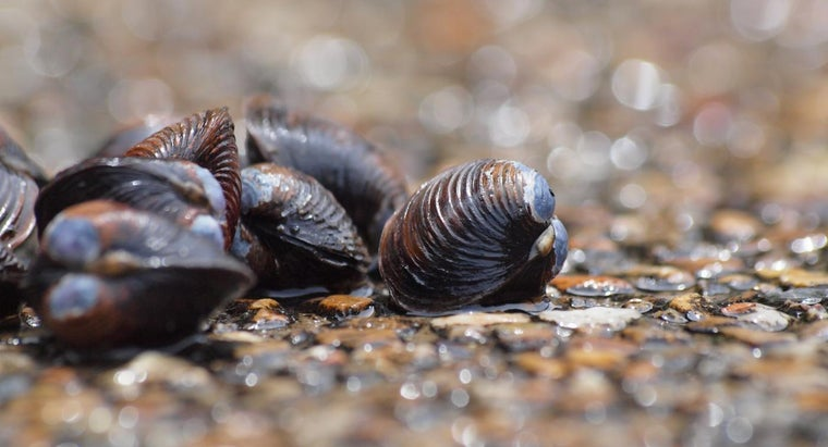 Can You Eat Freshwater Clams?