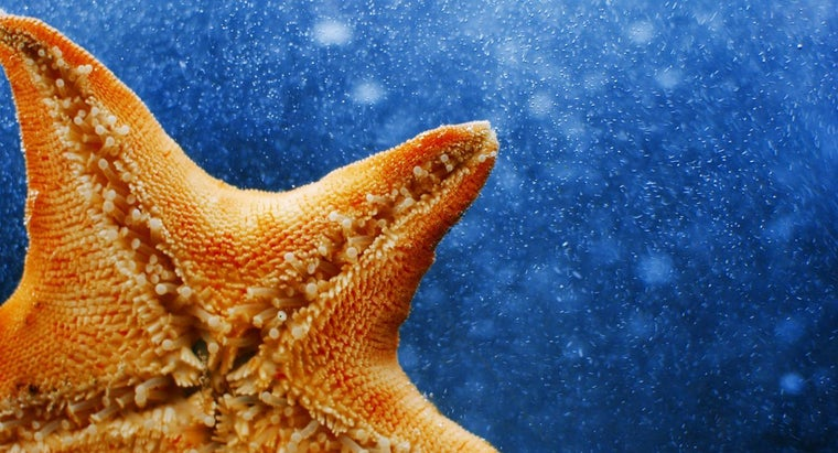 Can You Eat Starfish?