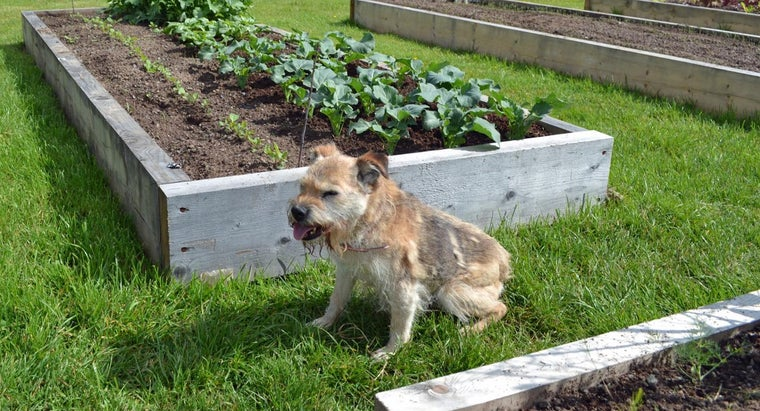 Can I Feed My Dog Spinach?