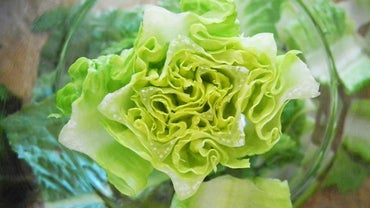 Can You Freeze Lettuce?