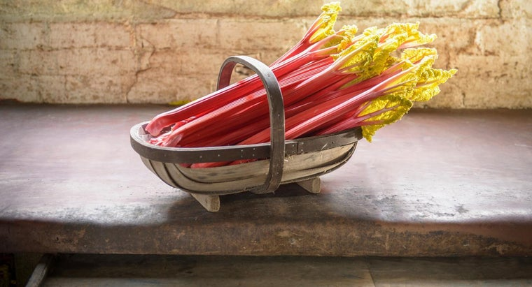 Can You Grow Rhubarb in a Pot?