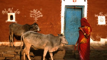 Can Hindus Drink Cow's Milk?