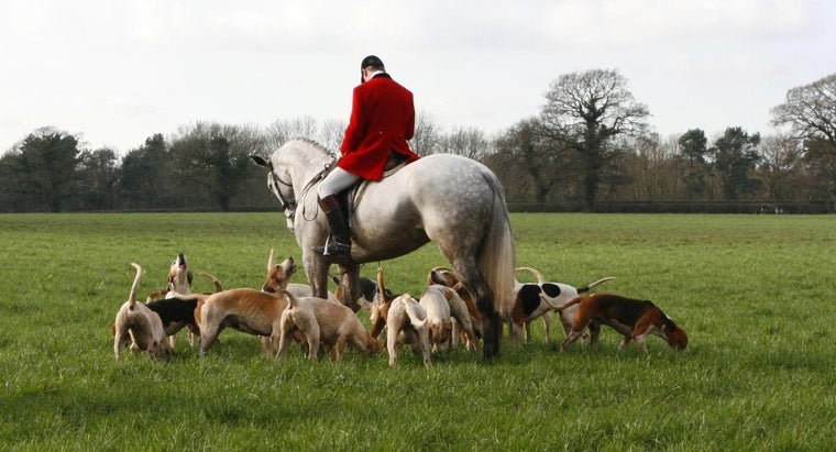How Can You Get Hounds for Hire?