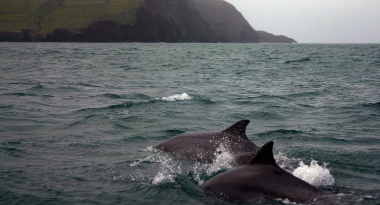 Can I Swim With Dolphins in Ireland?