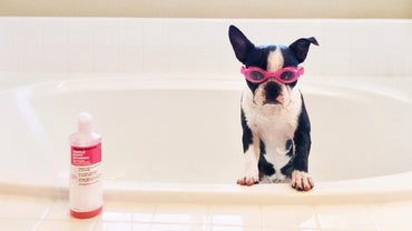 Can Baby Shampoo Be Used on a Dog?