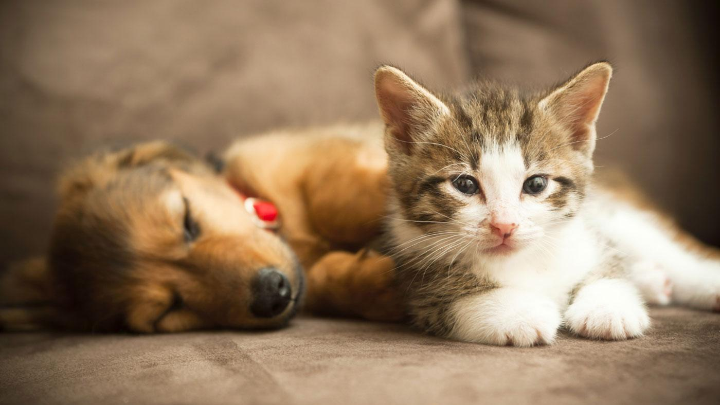 Can a Kitten and a Puppy Become Friends?