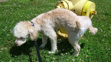 Where Can You Learn How to Potty Train a Dog Fast?