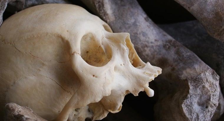 Where Can You Find a List of Common Bone Diseases?