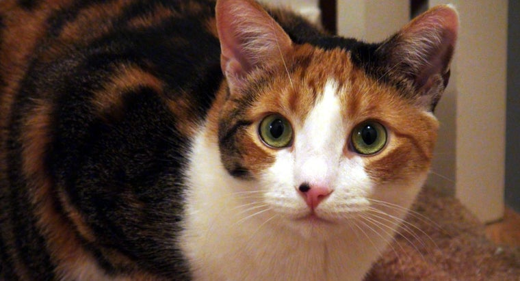 How Can I Name My Calico Cat?