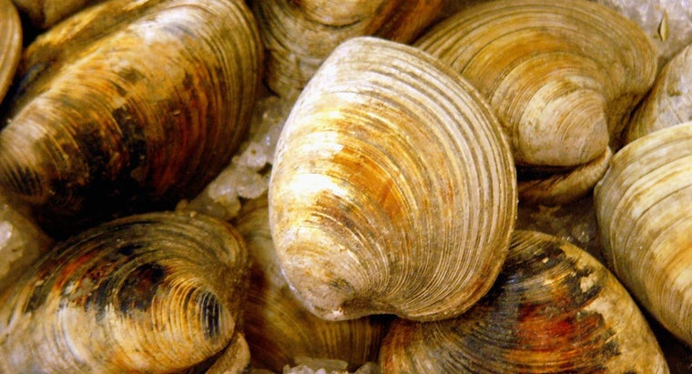 How Can One Tell If Clams Are Bad to Eat?