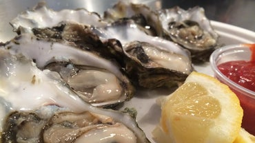 Can Oysters Be Frozen?