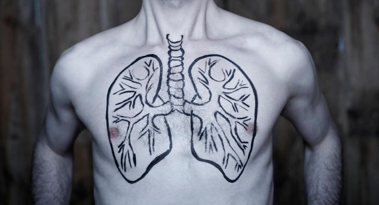 Can People Live With Only One Lung?