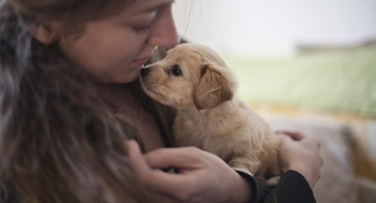Where Can You Find Pets for Adoption Besides Petfinder?