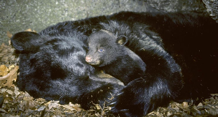 Where Can You Find Pictures of Animals Hibernating?