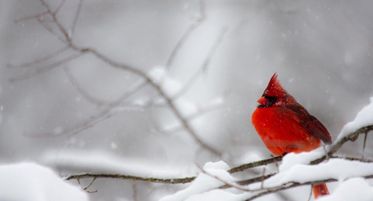 Where Can You Find Pictures of Birds That Can Be Found in Backyards?