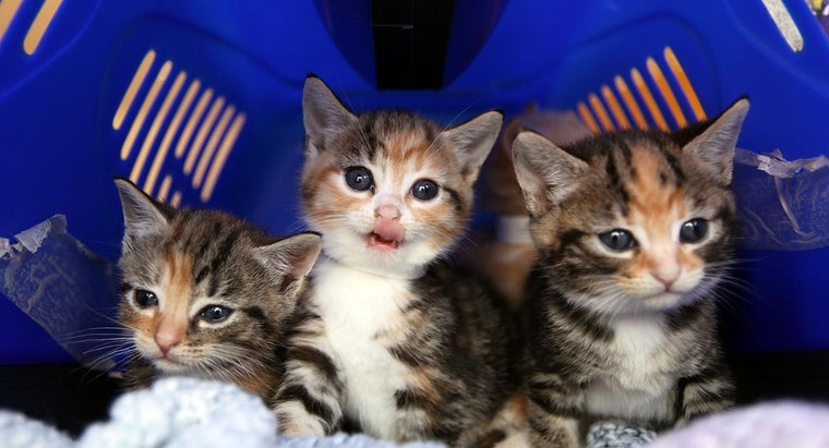Where Can You Find Pictures of Different Cat Breeds Online?
