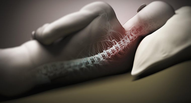 Where Can You Find Pictures of the Human Spinal Cord?