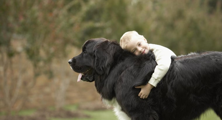 Where Can You Find Pictures of Large-Breed Dogs?