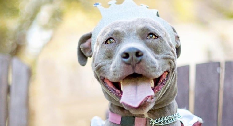 Where Can I Find a Pit Bull Bloodline List?