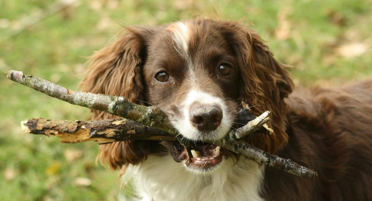 How Can You Prevent Your Dog From Getting Worms?