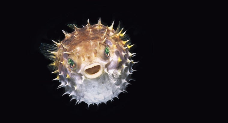 Can Puffer Fish Really Kill You?
