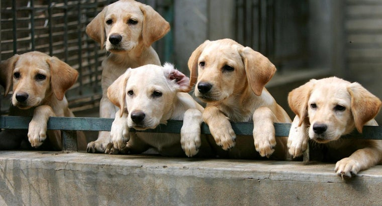 Where Can You Get Free Puppies or Dogs?