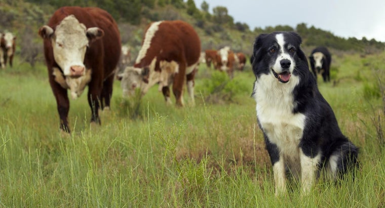 Can Puppies Drink Cows' Milk?