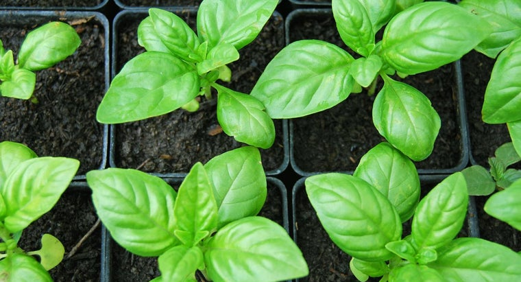 Where Can You Find Recipes That Use Dried Fresh Basil?
