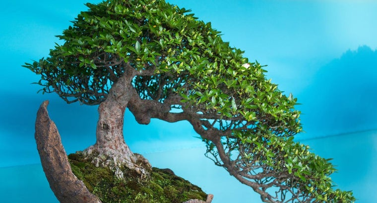 How Can I Revive My Bonsai Tree?