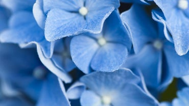 Where Can You Find Royalty-Free Pictures of Flowers?